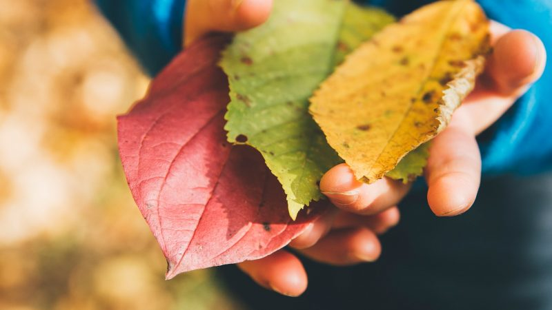 Dreng med forskelig farvede blade i hånden